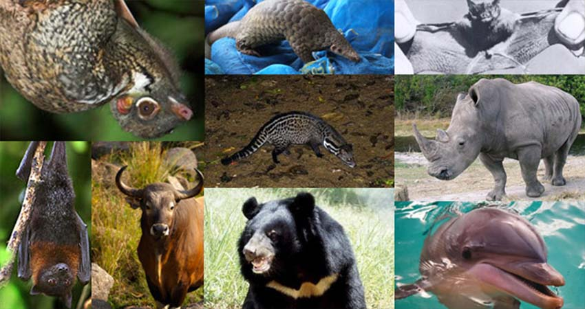The Animals of Thailand that are Endangered that Must be Known